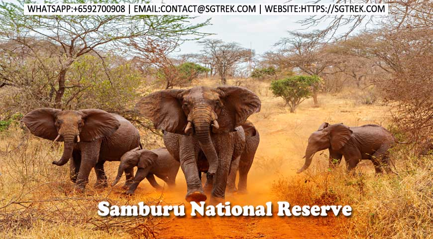 10D9N-Samburu-Tsavo-Amboseli National Reserve | Safari | Photography